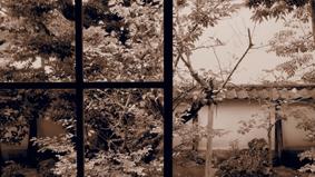 植物の不思議パワー!家に植えると不吉な木は?大きさと方位にも注意