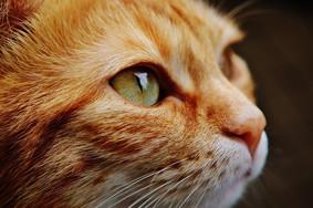 猫は特殊能力を持っている?