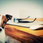 ペットが脳を活性化?