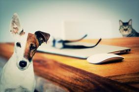 ペットが脳を活性化するポイントは?