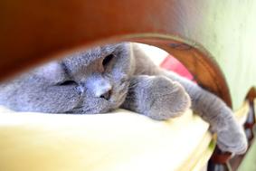 ぽかぽか陽気に誘われて・・・眠気対策とは?