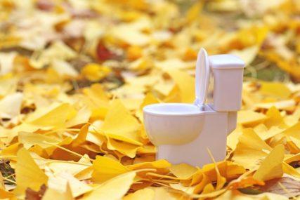 トイレ風水で金運を呼ぶ
